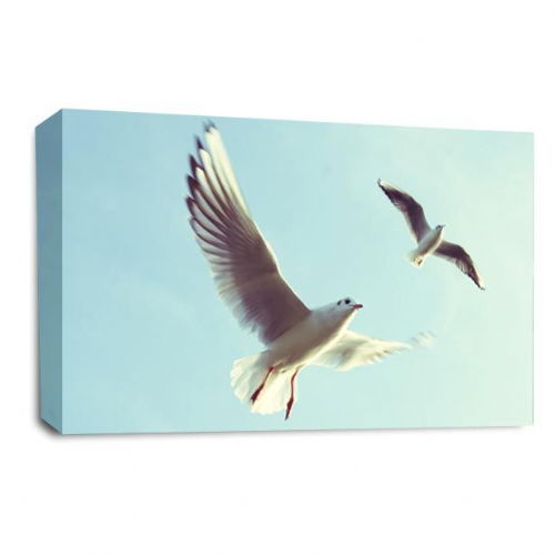 Seagull Flying Seaside Canvas Wall Art Picture Print